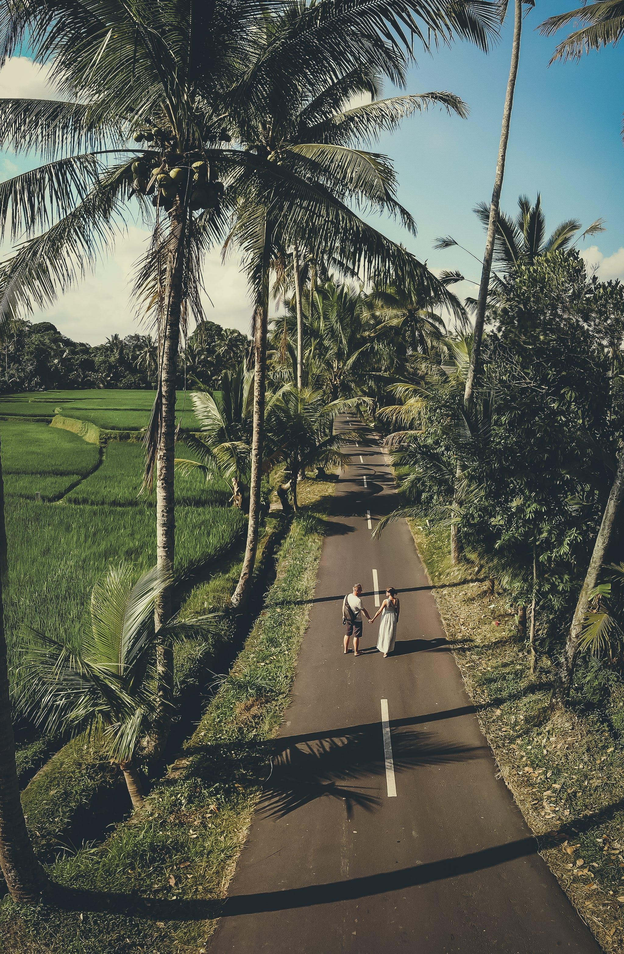 Kostenloses Stock Foto zu asien, bali, bäume, indonesien