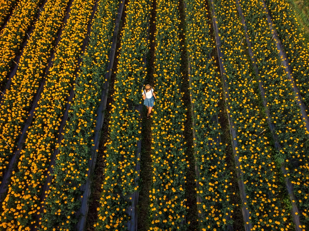 Aerial Photo of Woman Standing in Flower Field
