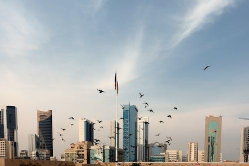 Fotos de stock gratuitas de arquitectura, asta de bandera, bandada de pájaros, céntrico