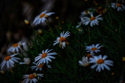 #マクロ写真#フラワー#屋外#ニコンの無料の写真素材
