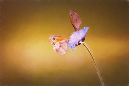 Free stock photo of nature, blue, summer, animal