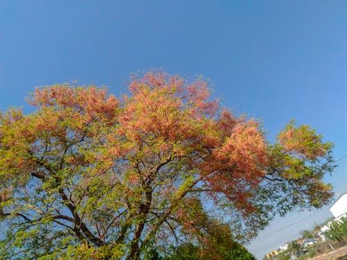 Free stock photo of beautiful flowers, blue sky, brasil, flower