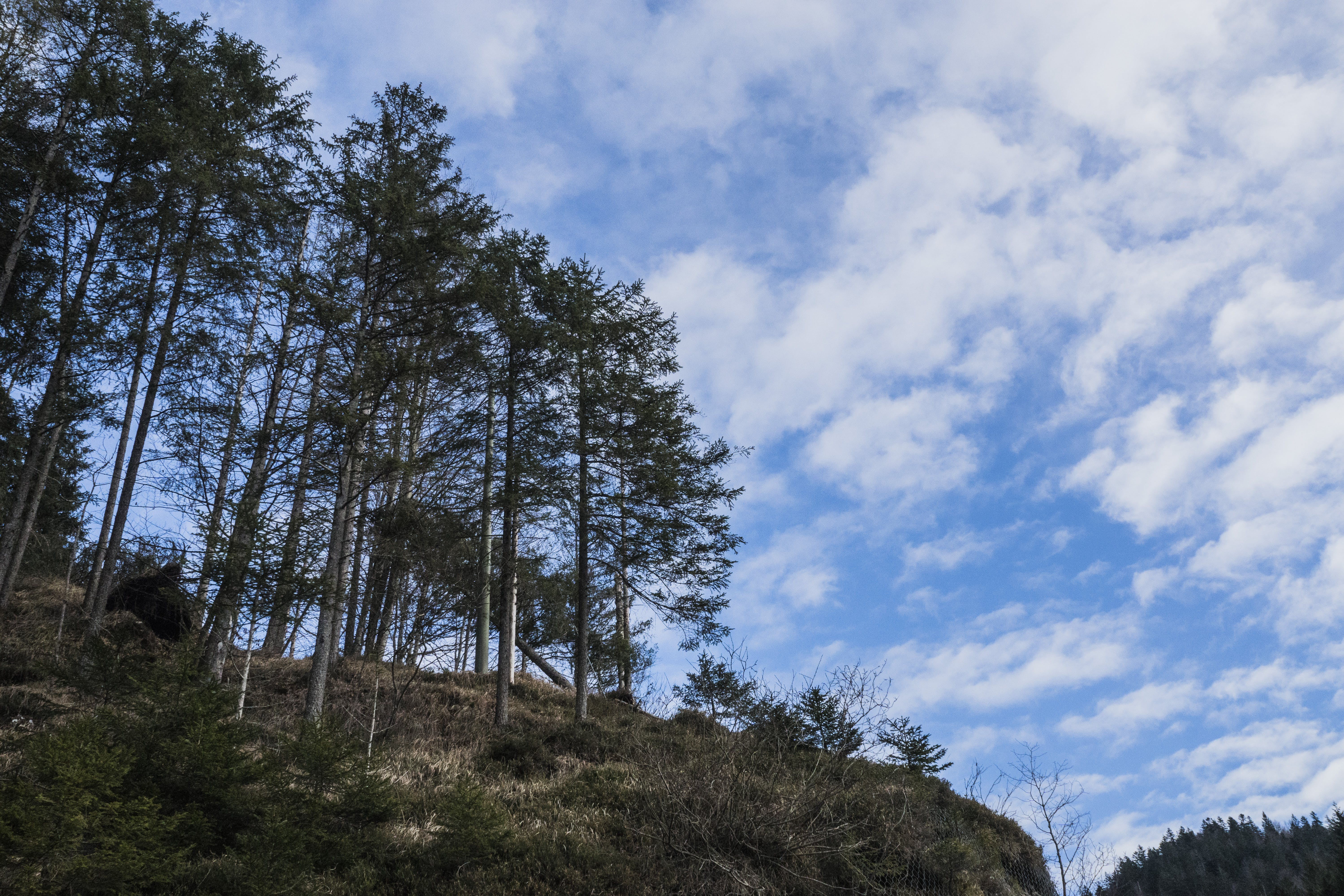 Free stock photo of forest, mountain, natural disaster, snow