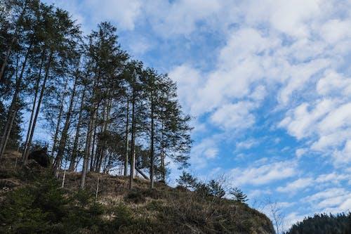Kostnadsfri bild av berg, naturkatastrof, skog, snö