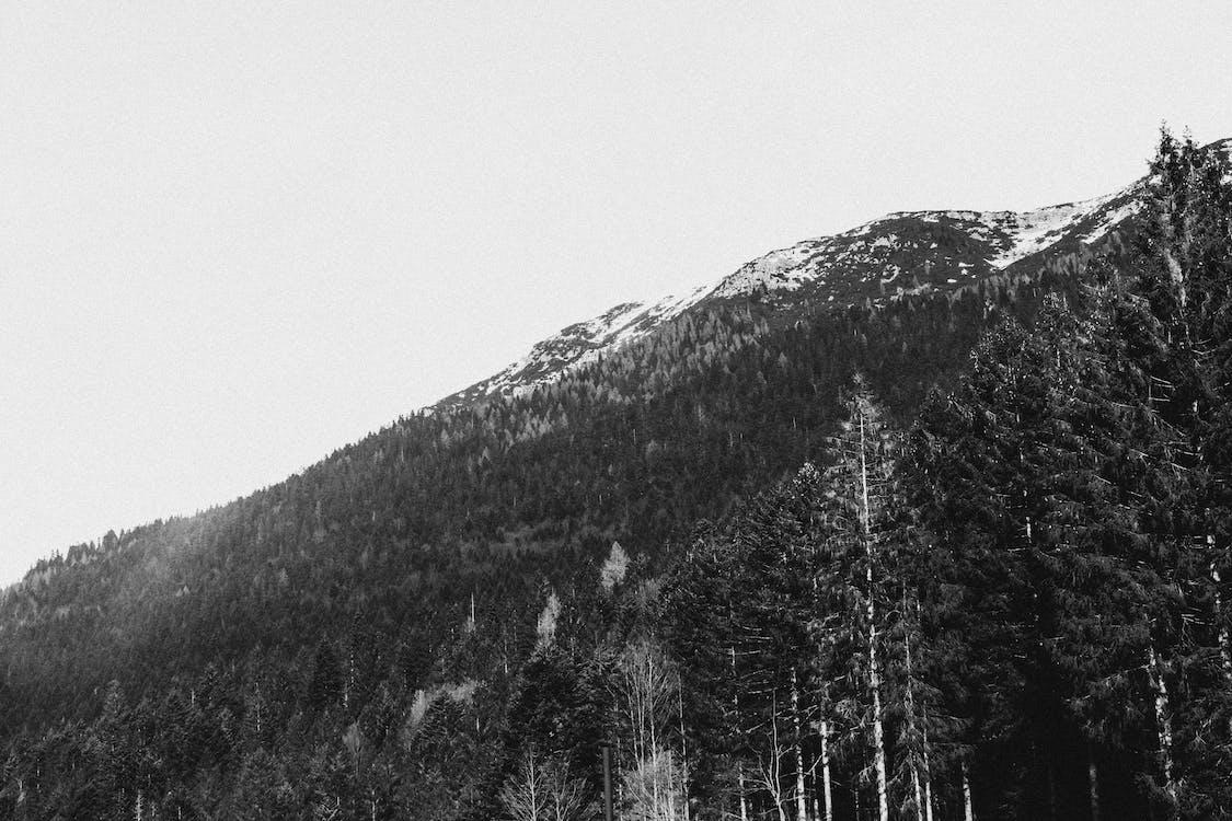 borovice, černobílá, denní světlo