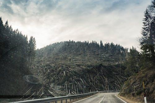 Darmowe zdjęcie z galerii z droga, drzewa, drzewo iglaste, góra