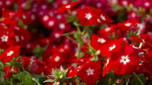 シーズン, フローラ, 咲く, 庭園の無料の写真素材