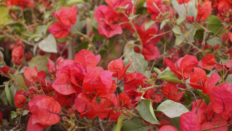 Foto d'estoc gratuïta de botànic, brillant, camp de flors, colors