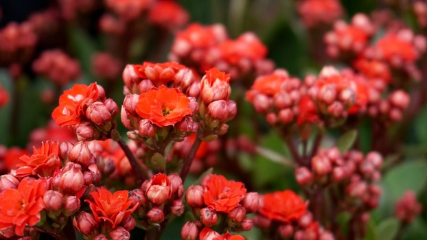 Free stock photo of nature, red, flowers, garden