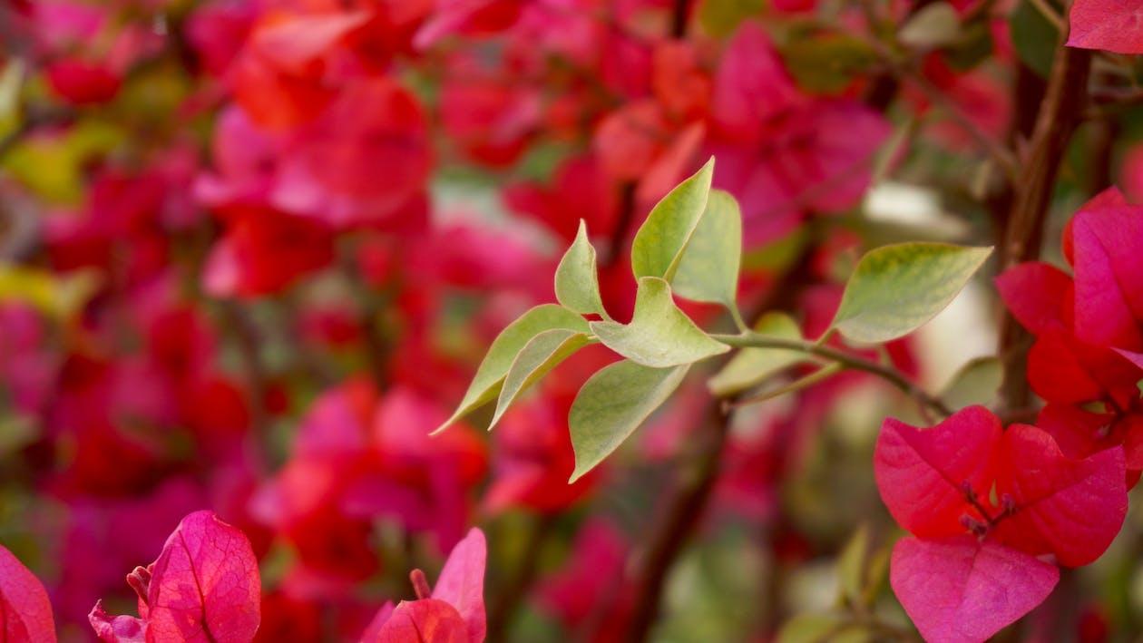 домашній сад, зростання, квіти