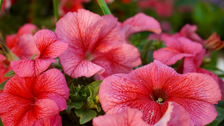Ingyenes stockfotó botanikus, fényes, gyönyörű virágok, kert témában