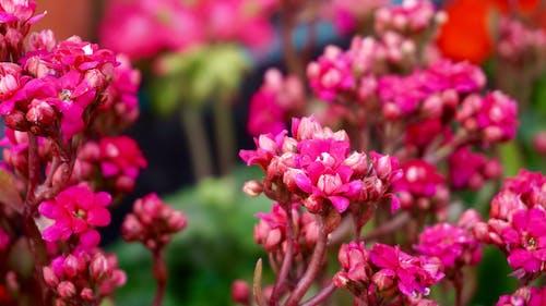 美しい花, 花の束, 花の花の無料の写真素材