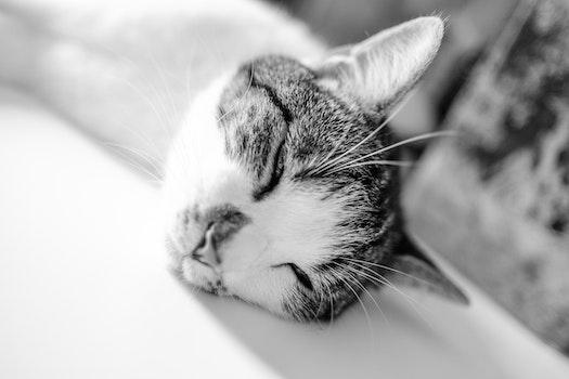 Brown White Short Fur Cat Lying on White Textile