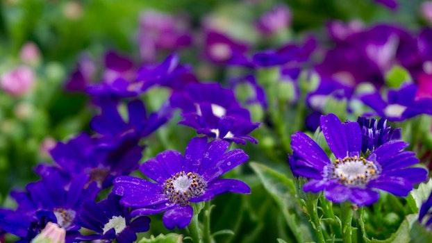 Free stock photo of field, flowers, garden, petals
