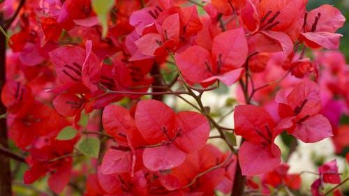 bahçe çiçeği, bitki örtüsü, büyüme, çiçek açmış içeren Ücretsiz stok fotoğraf