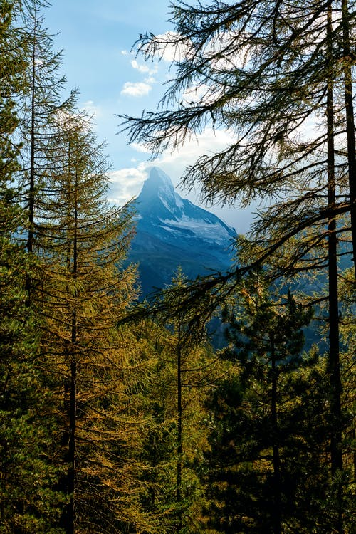 Landscape Photography of Matterhorn Behind Trees