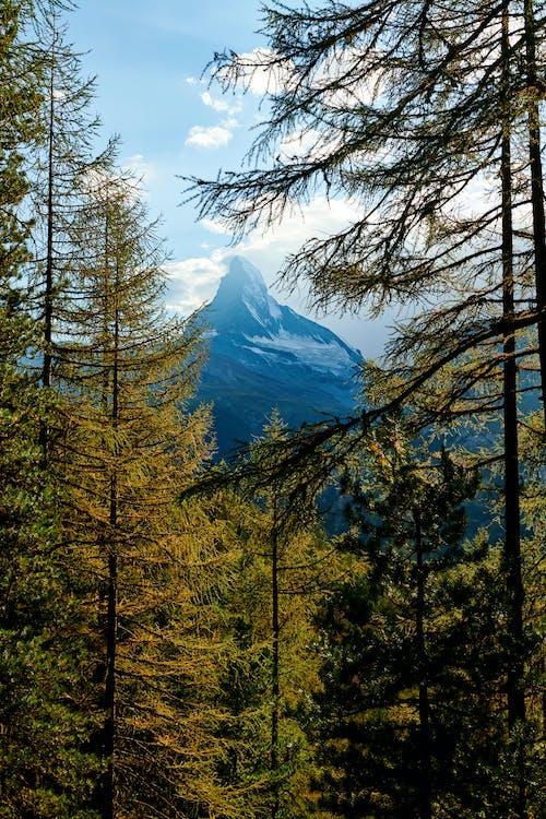 ağaç, ağaçlar, ahşap, çam içeren Ücretsiz stok fotoğraf