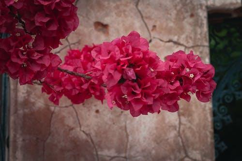 Foto profissional grátis de ancião, fendas, flores, jardim