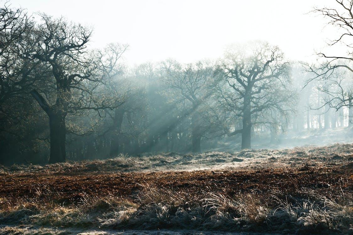 ฤดูหนาว, หนาวจัด, ไม้