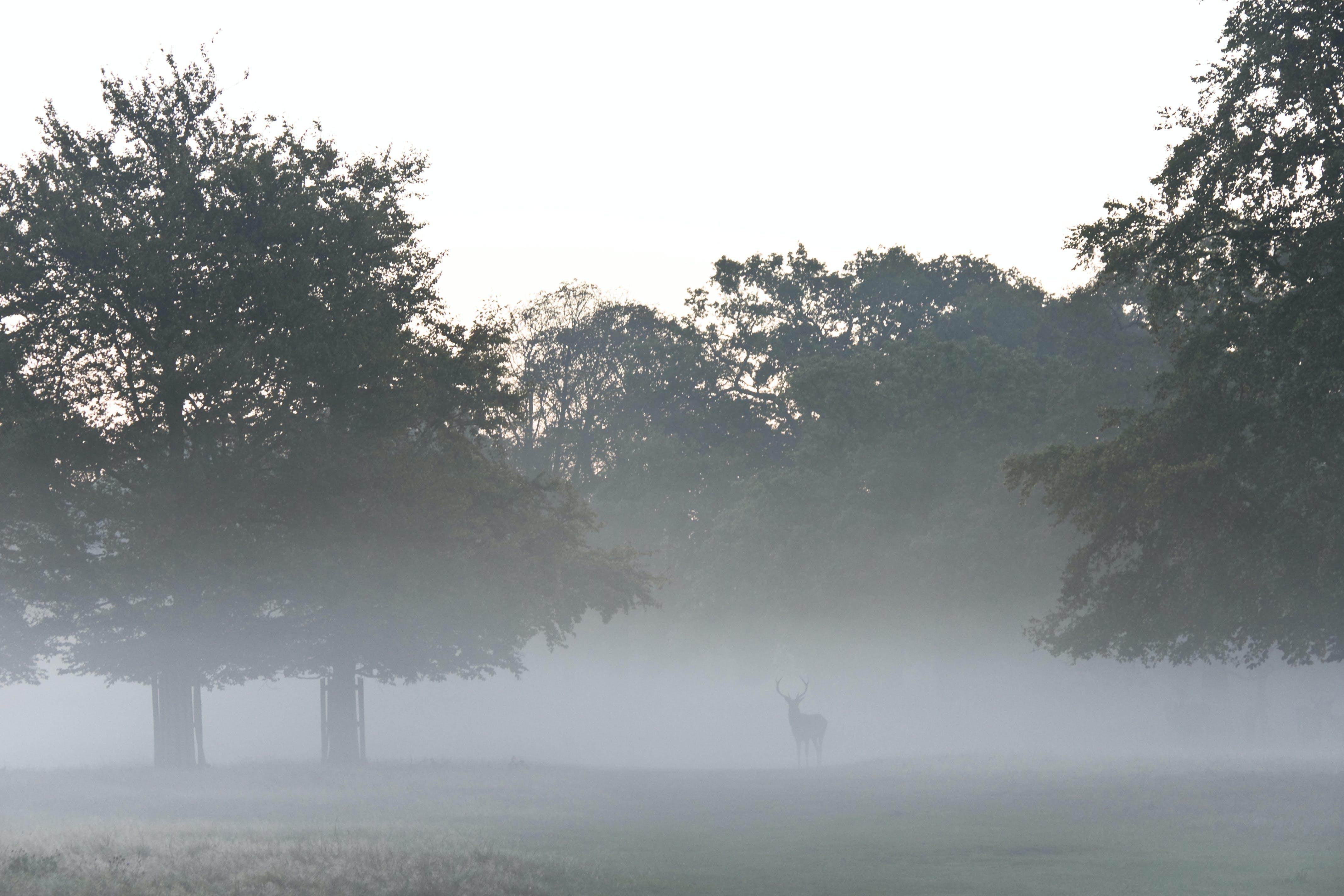 Photo of a Buck Beside Trees