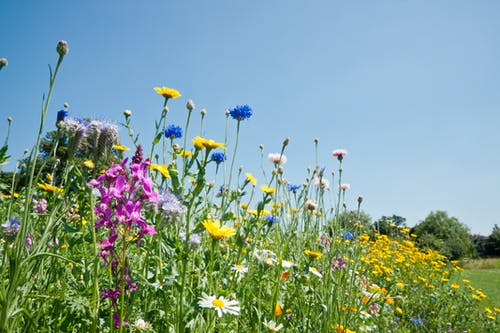 Free stock photo of bright, flora, meadow, summer