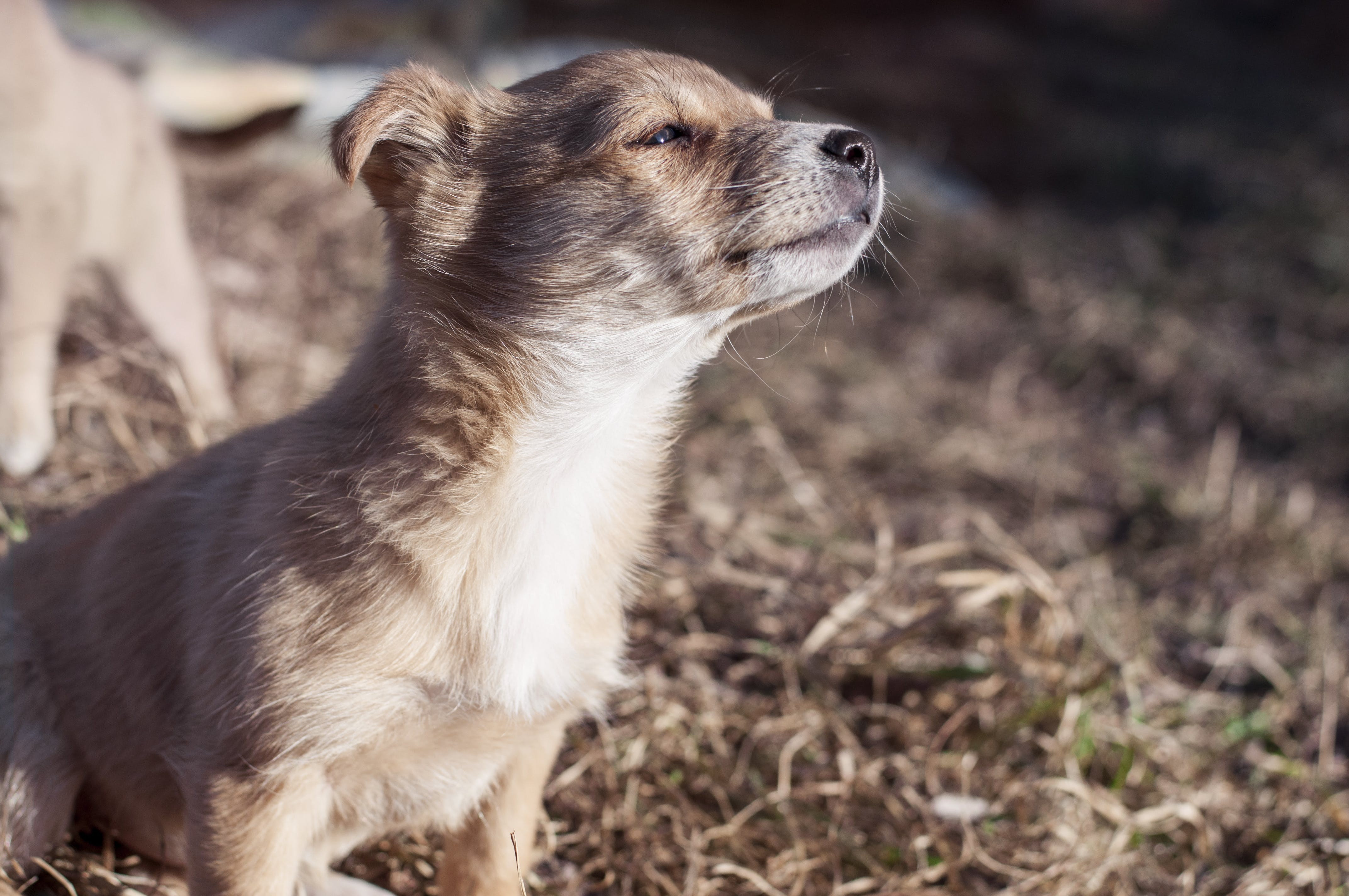 Selective Focus Photography of Puppy on Dried Grass