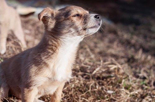 Základová fotografie zdarma na téma čichání, domácí mazlíček, pes, štěně