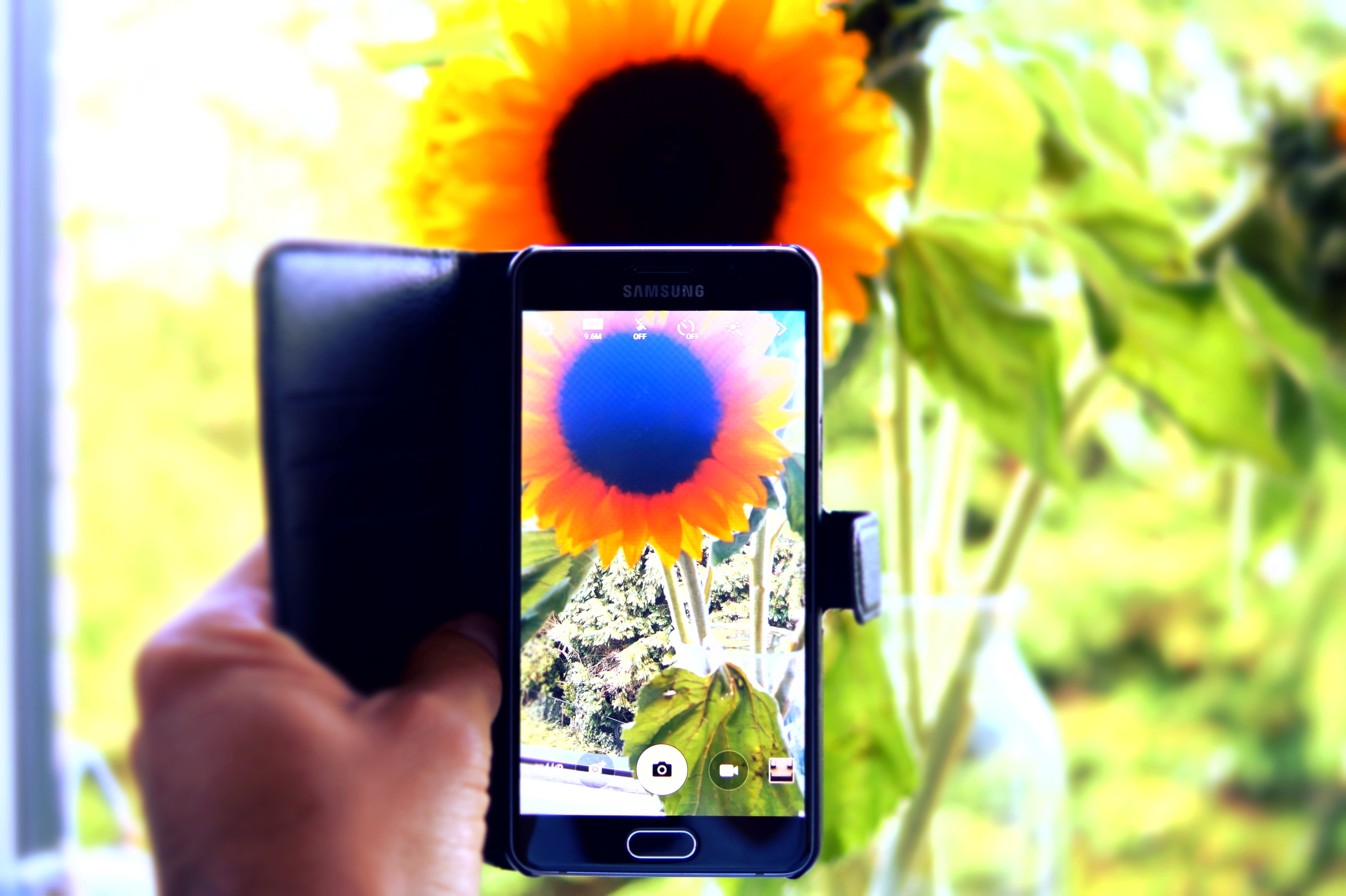 Free stock photo of mobile phone, sunflower