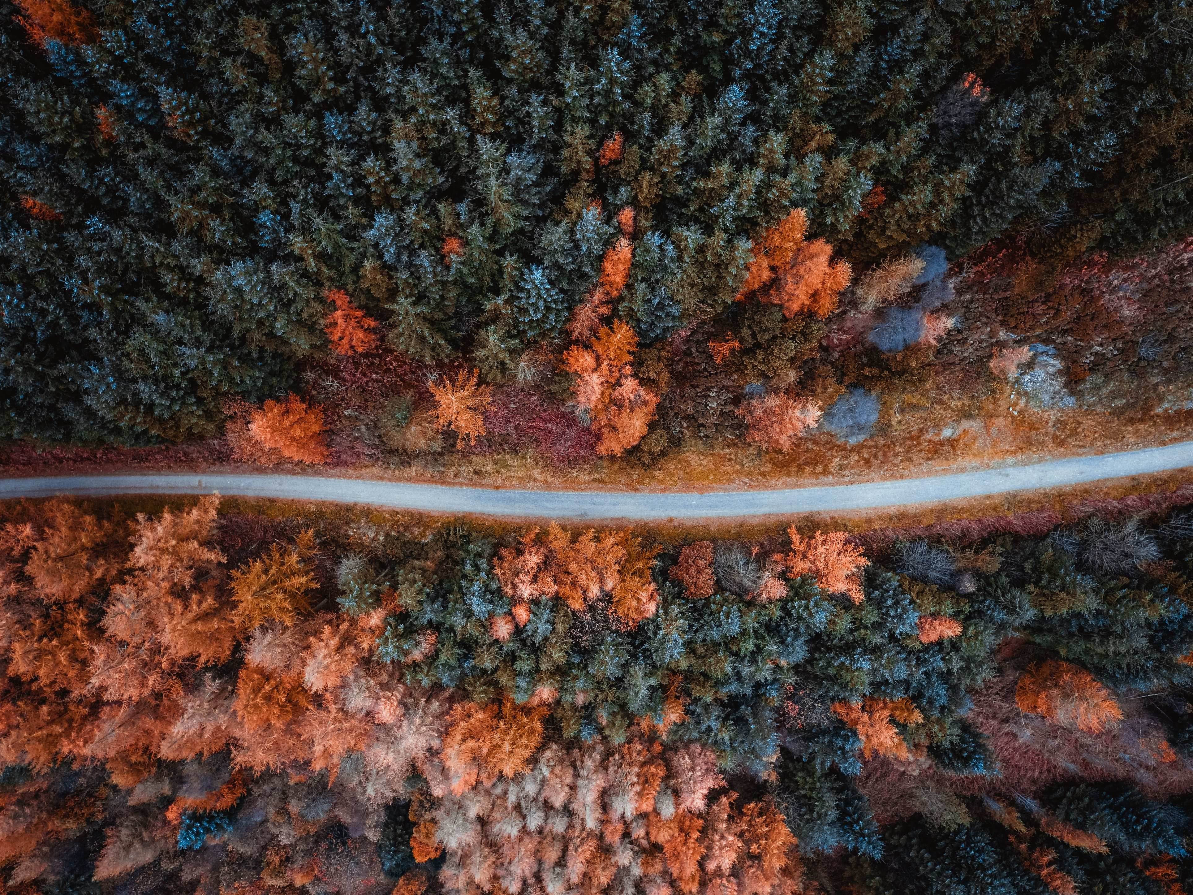 Aerial Shot Of Trees