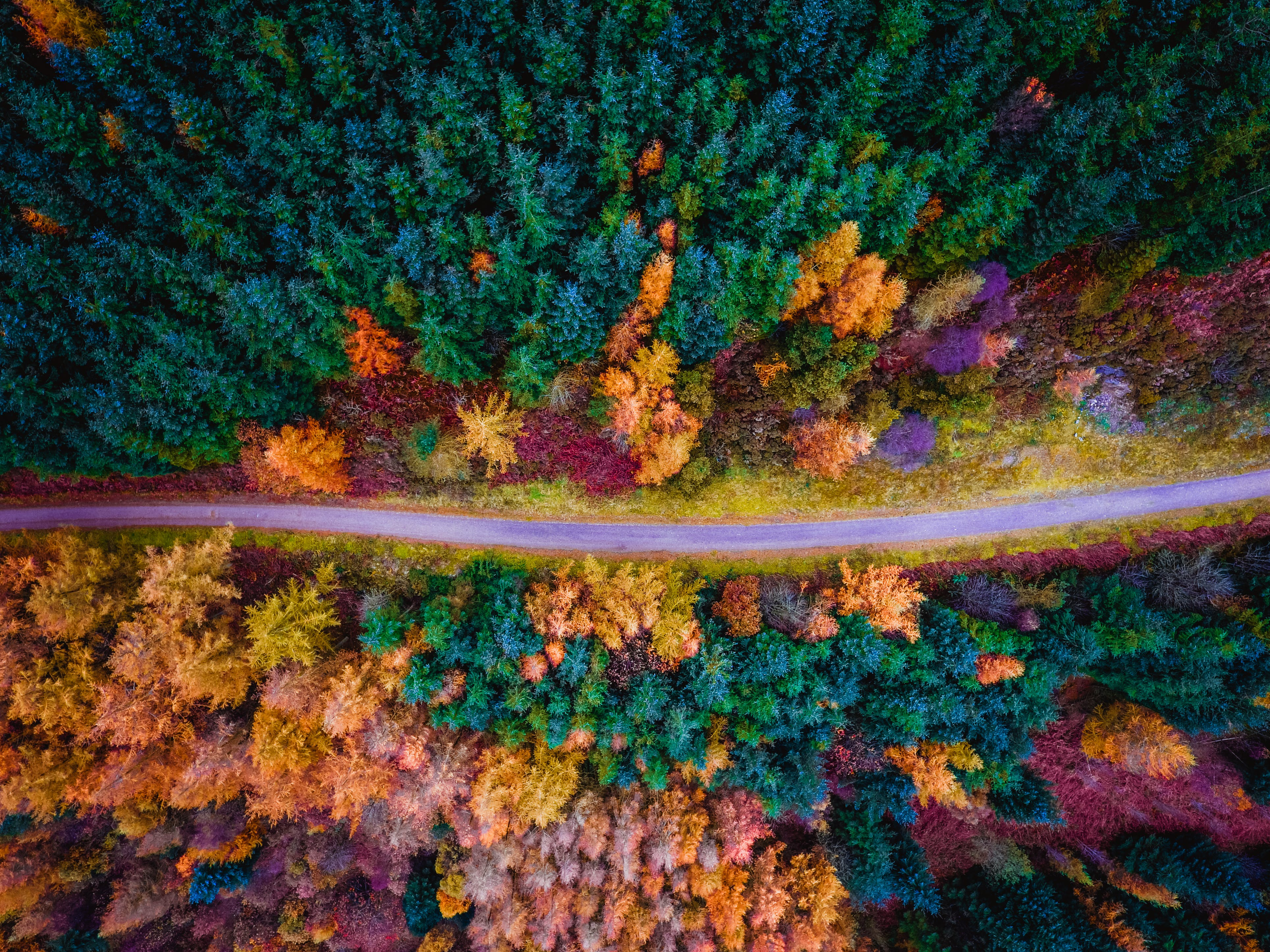 Aerial View of Road Along Pine Trees