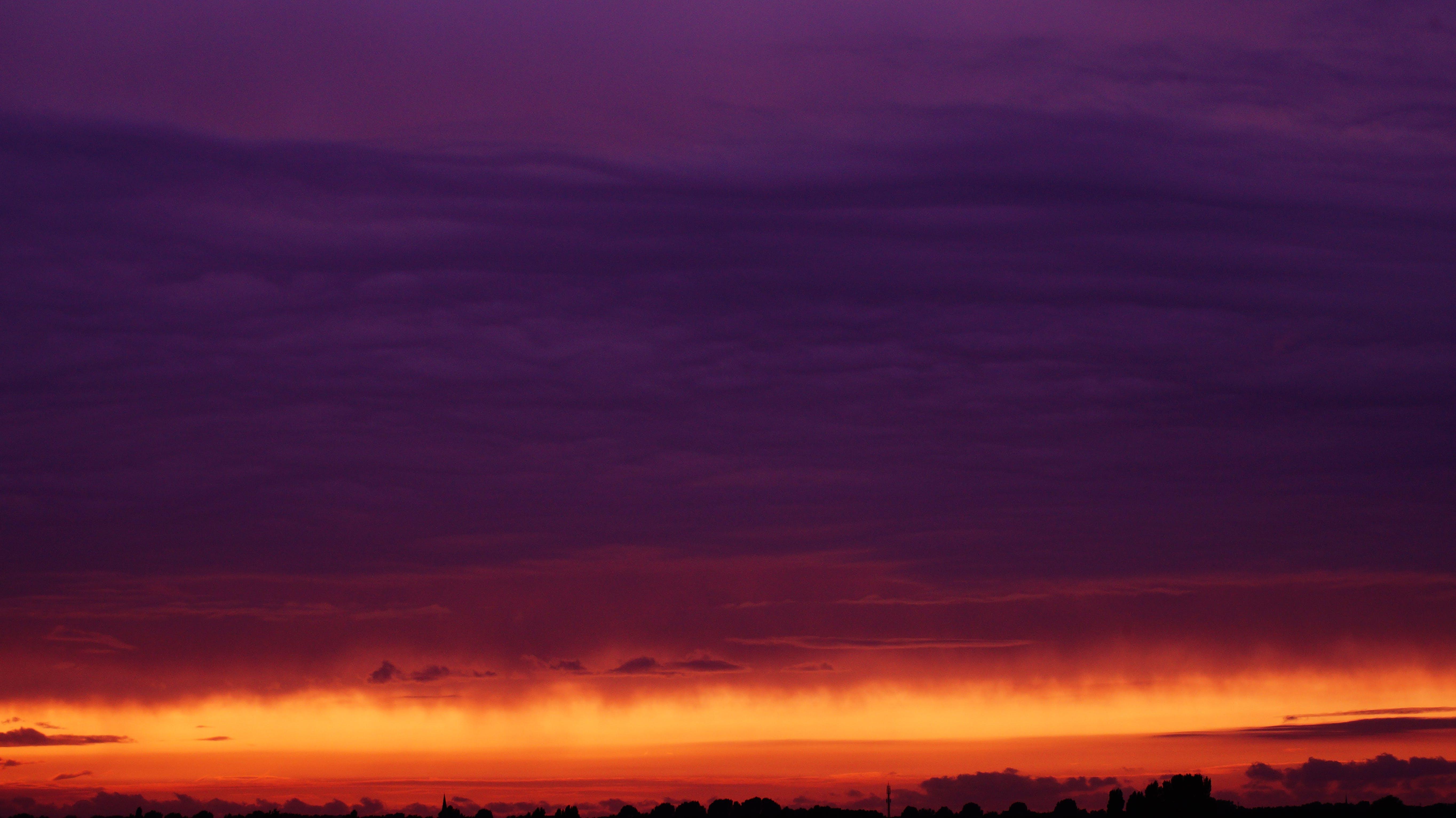 Silhouette of Trees Under Dark Sky during Dusk