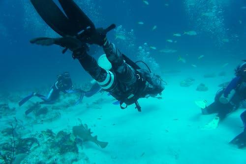 Free stock photo of ataque de tiburón, beach, bleeding control, dive