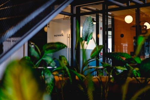 Ilmainen kuvapankkikuva tunnisteilla business, kasvit, konttori, lasiruudut