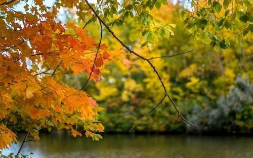 Foto profissional grátis de folhagem de outono