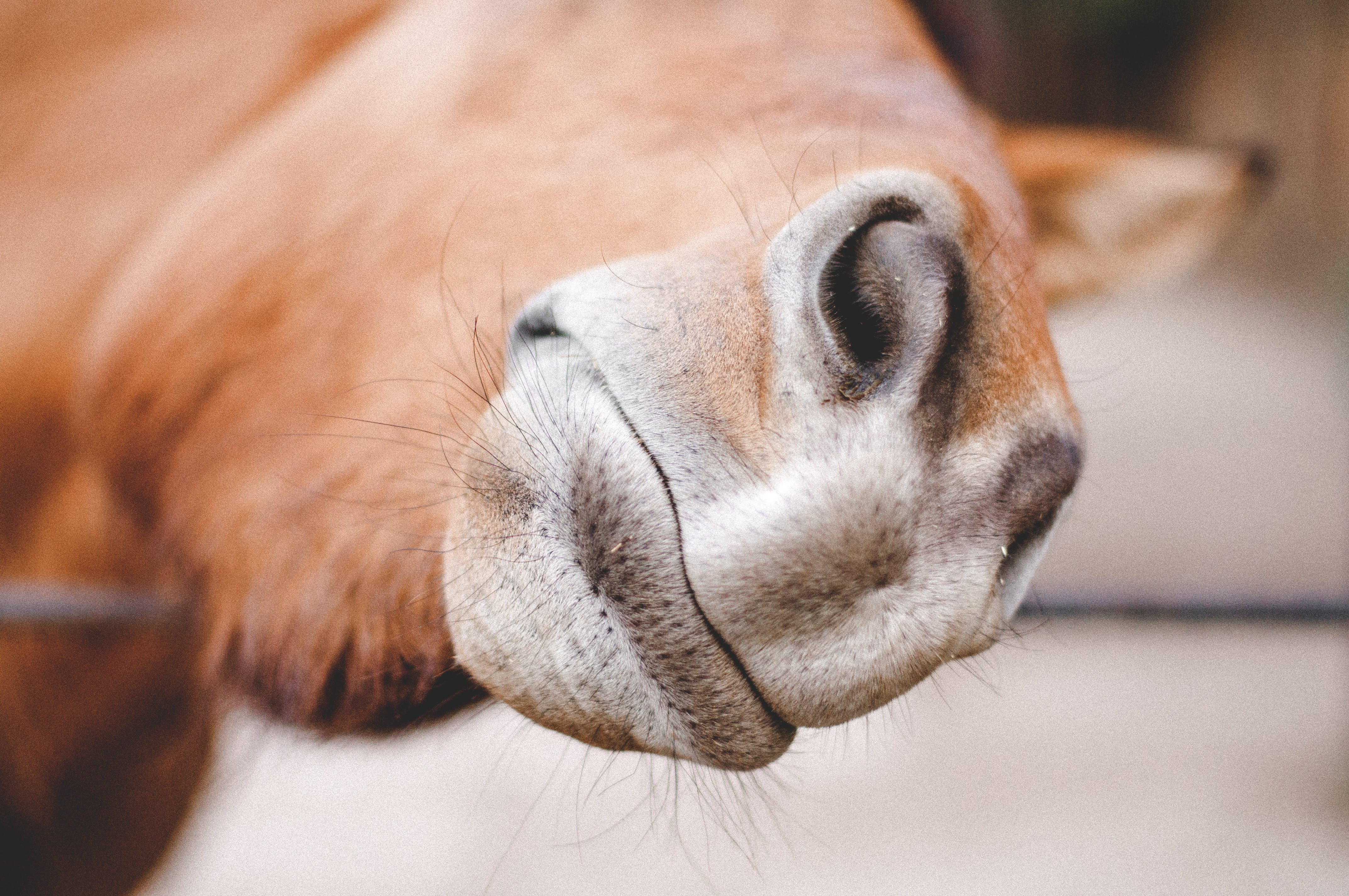 Close-up Photography of Brown Animal Nose