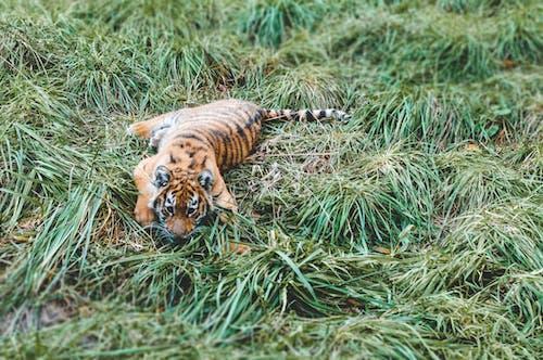 Foto profissional grátis de animal, esconde-esconde, escondendo, gato