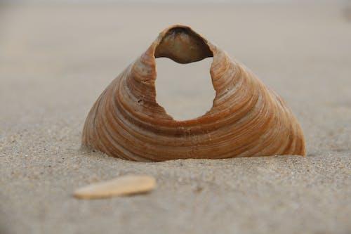 Δωρεάν στοκ φωτογραφιών με ακτή, άμμος, ασπόνδυλος, γκρο πλαν