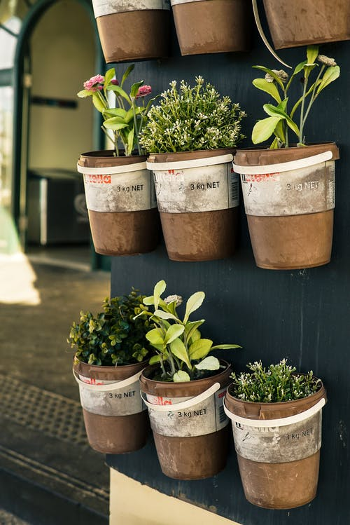 Six Potted Plants Close-up Photo