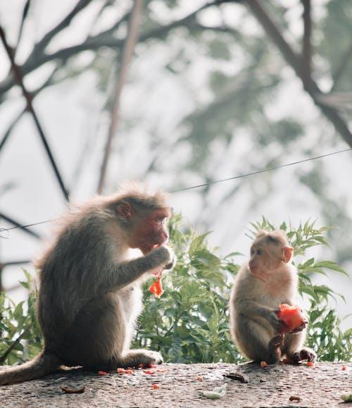 Photos gratuites de apprendre, bébé singe, faune, nature