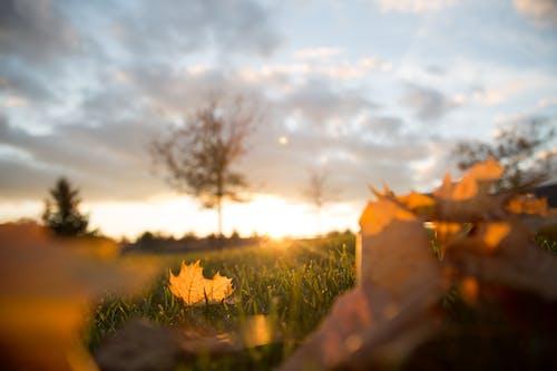 Základová fotografie zdarma na téma hřiště, javorové listy, mraky, obloha