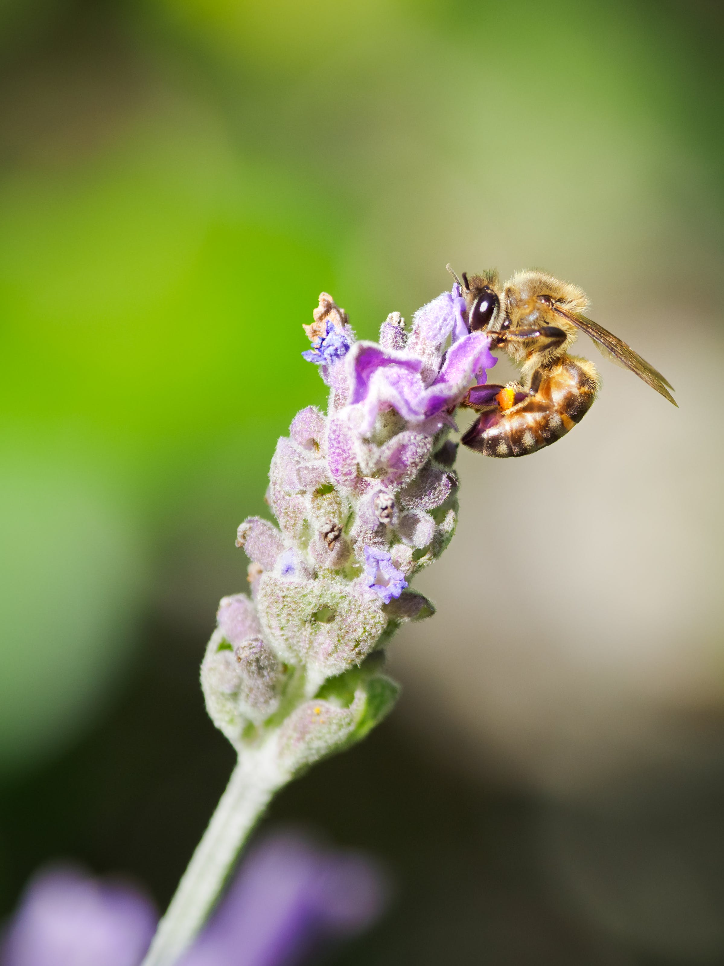 Close-Up Photo of Wasp On Flower