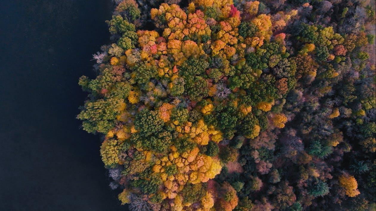 秋の気分の森, 紅葉, 色落ち