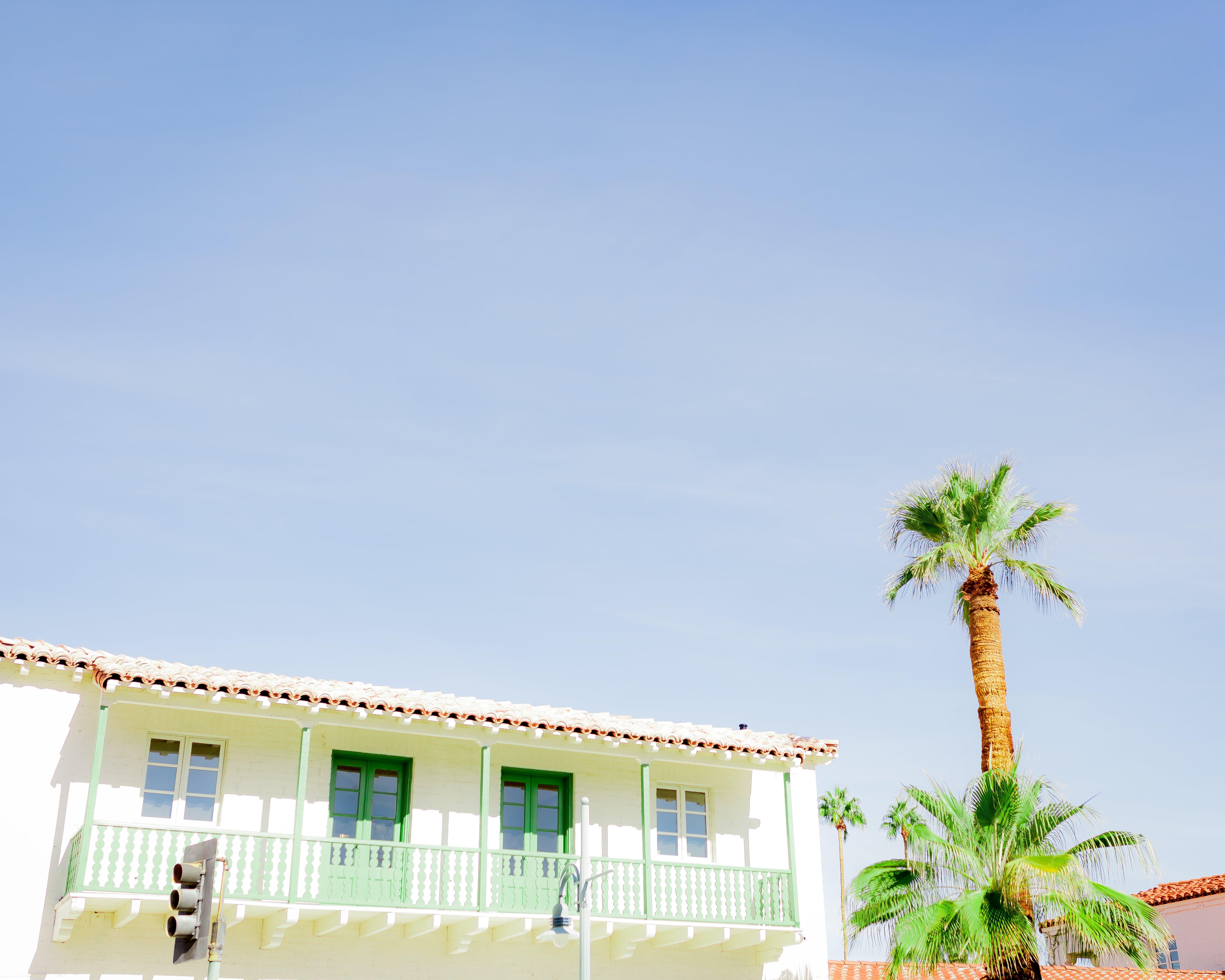 Palm Tree Under Blue Sky