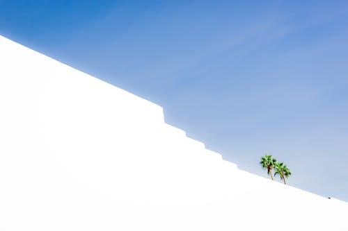 低角度拍攝, 光, 光線, 夏天 的 免费素材照片
