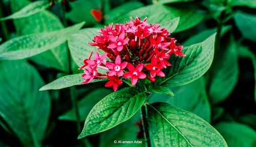 Gratis lagerfoto af kunstige blomster, smukke blomster