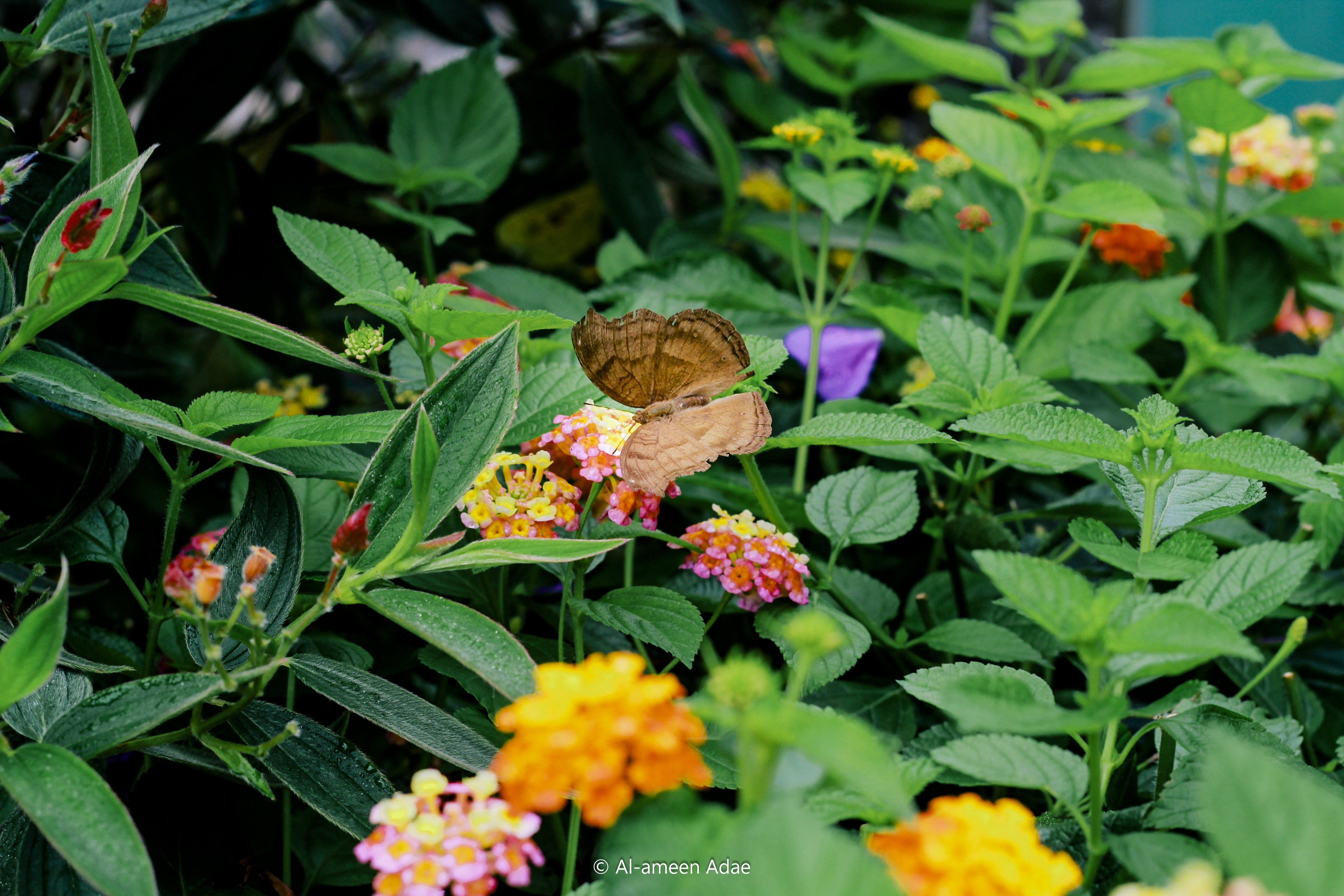 Free stock photo of artificial flowers, beautiful flowers, butterfly on a flower