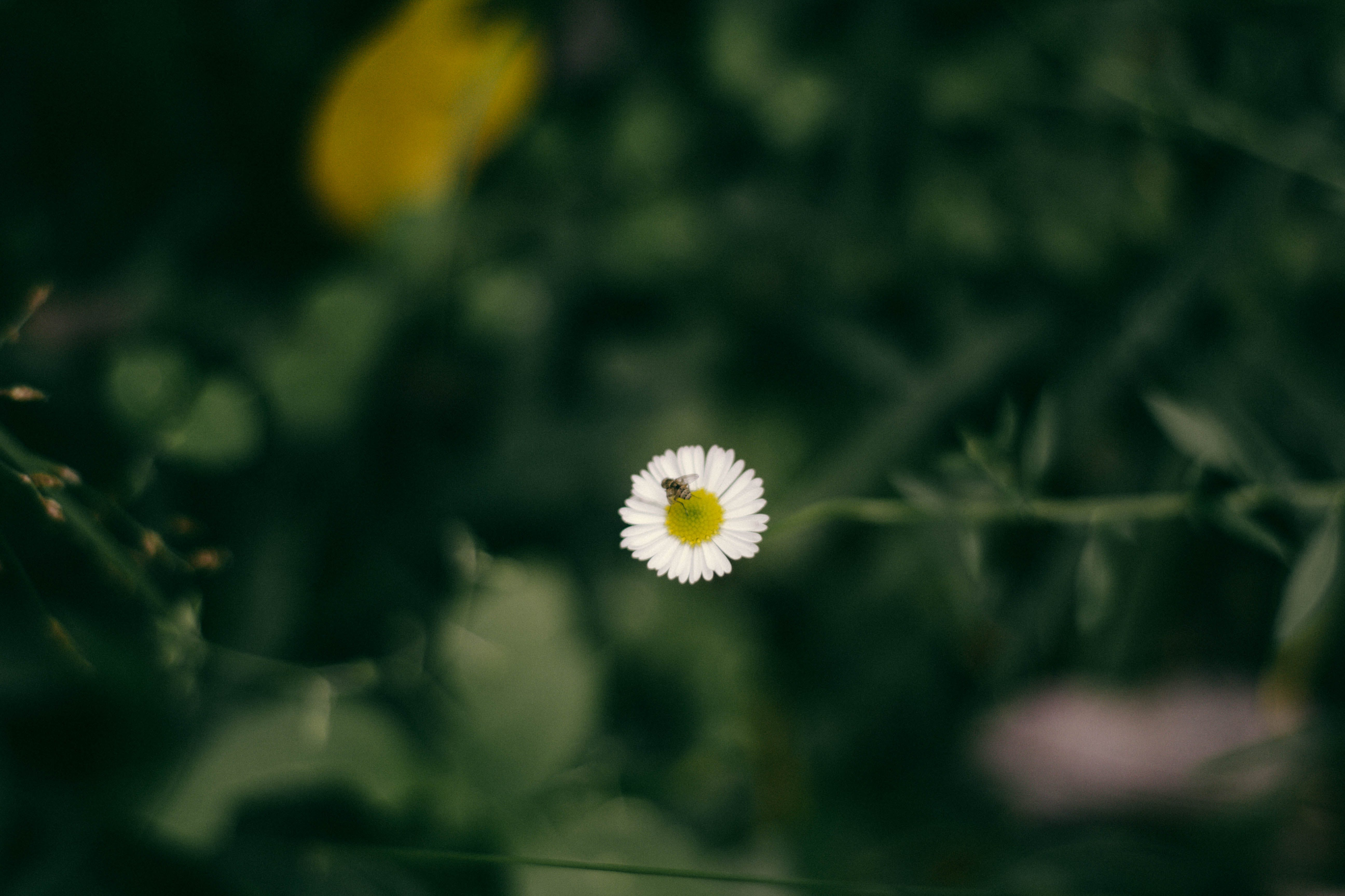 Free stock photo of beautiful flowers, beauty in nature, natural, nature life