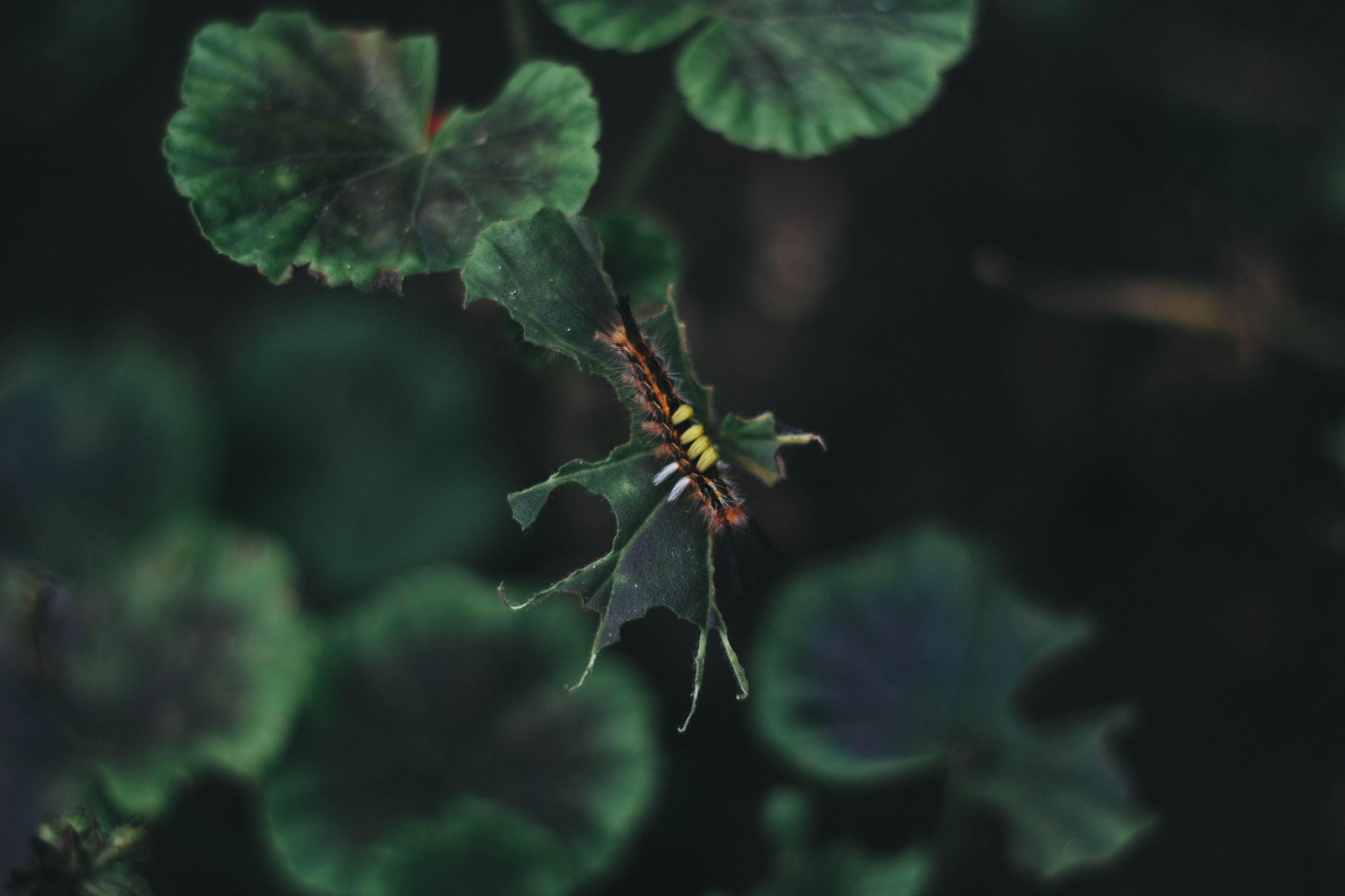 Close-Up Photo of Caterpillar On Leaf