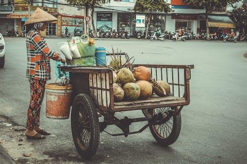 คลังภาพถ่ายฟรี ของ # tiếngviệt, #tracynguyenphotoraphy