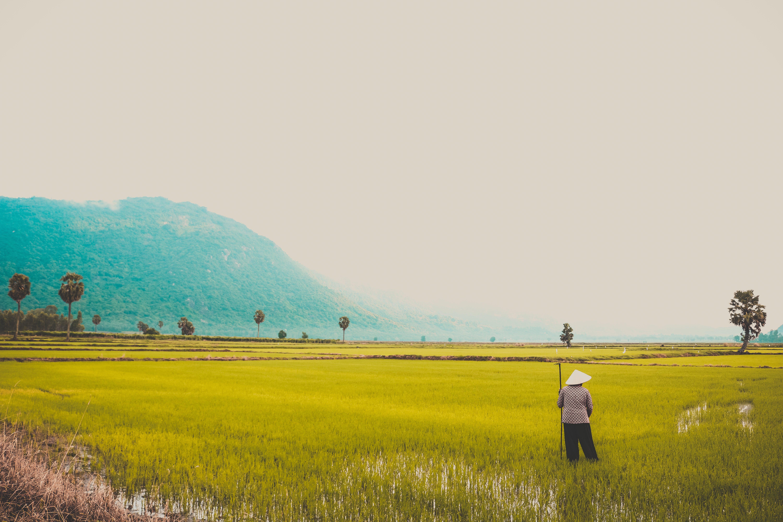 #vietnamesisch, acker, ackerland